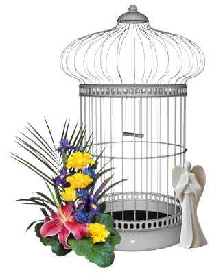 Jak wybrać odpowiednią karmę dla ptaków
